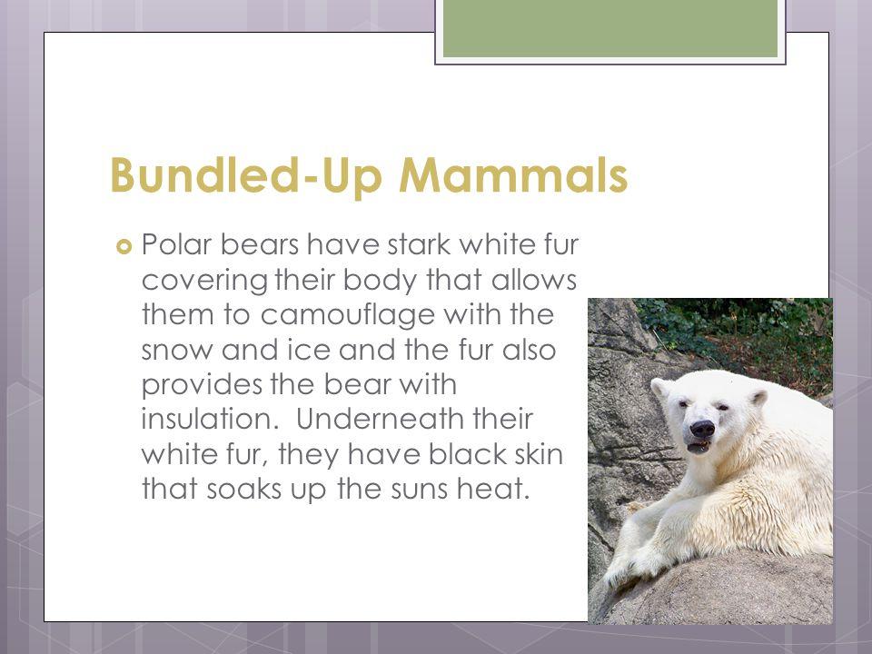 Bundled-Up Mammals
