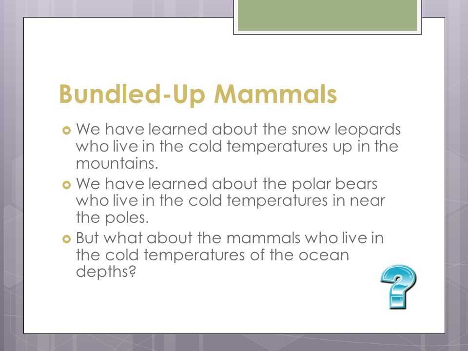 Bundled-Up Mammals We have learned about the snow leopards who live in the cold temperatures up in the mountains.