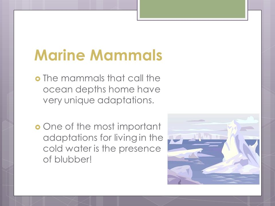 Marine Mammals The mammals that call the ocean depths home have very unique adaptations.