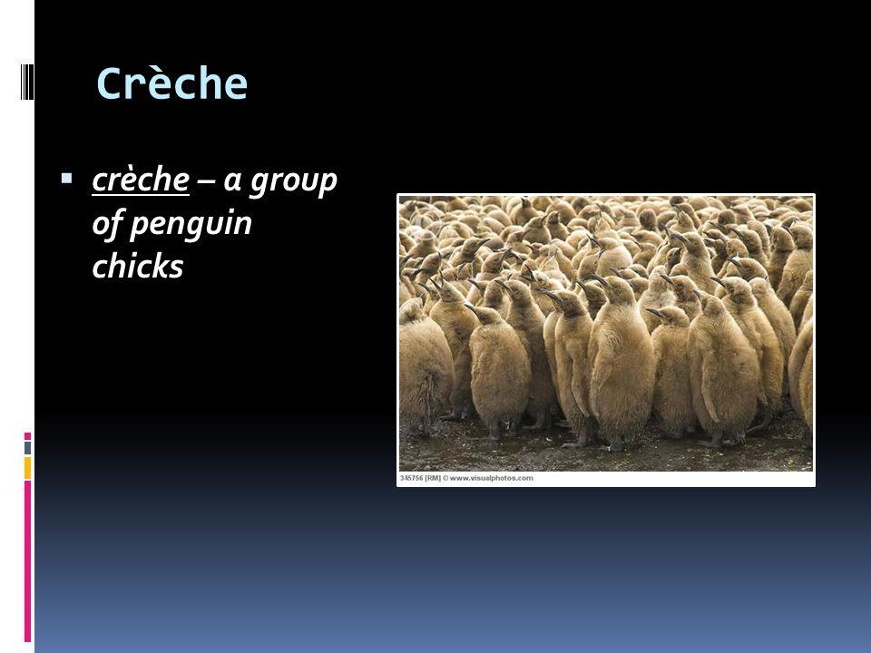 Crèche crèche – a group of penguin chicks