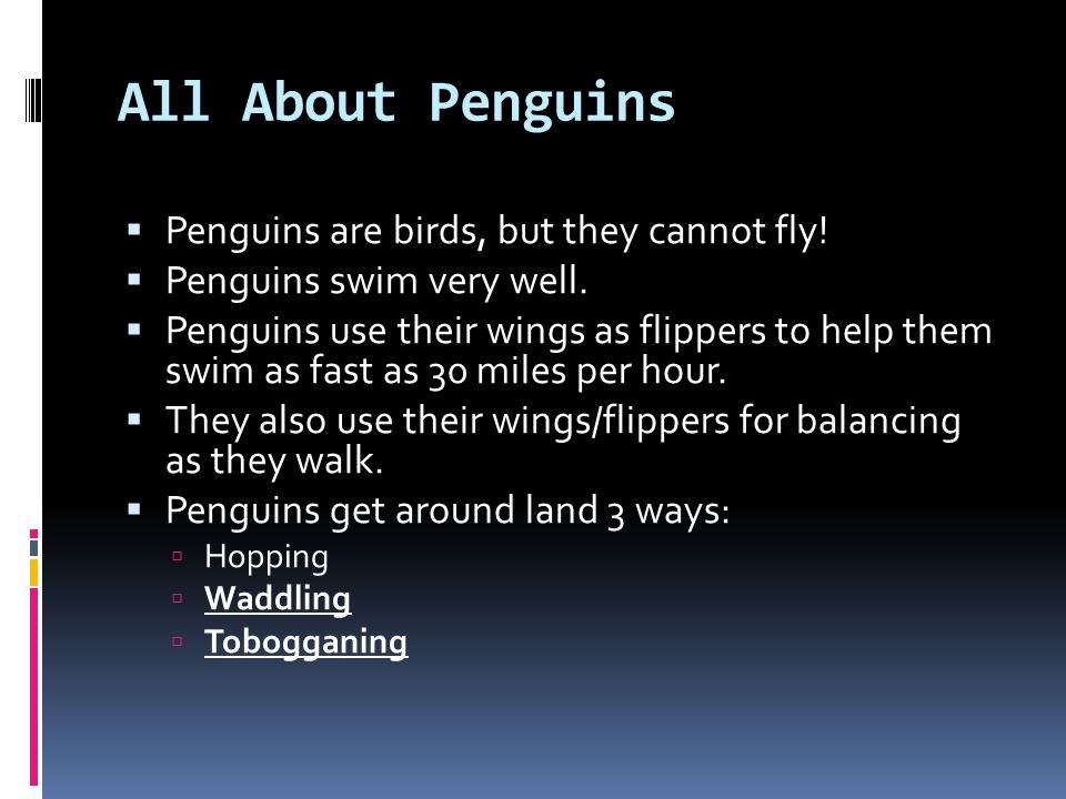 All About Penguins Penguins are birds, but they cannot fly!