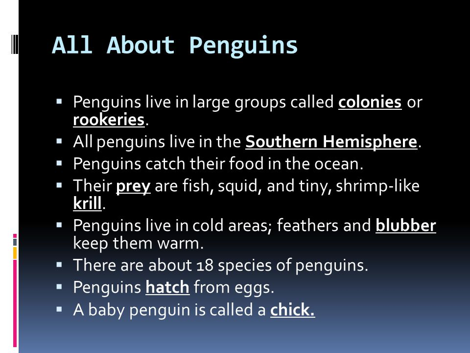 All About Penguins Penguins live in large groups called colonies or rookeries. All penguins live in the Southern Hemisphere.
