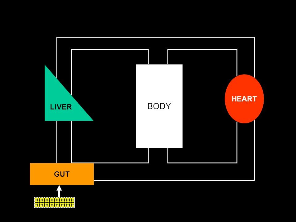 LIVER BODY HEART GUT