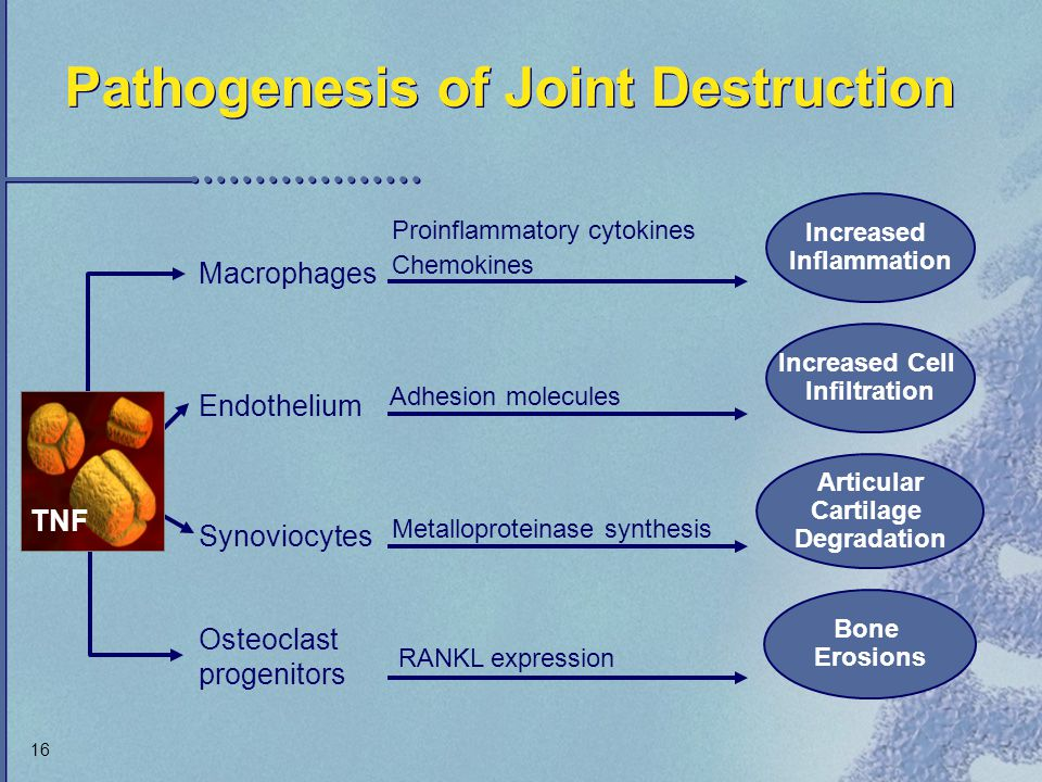 Pathogenesis of Joint Destruction