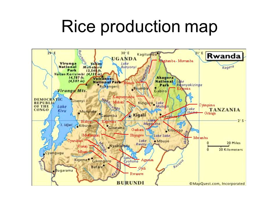 Rice production map
