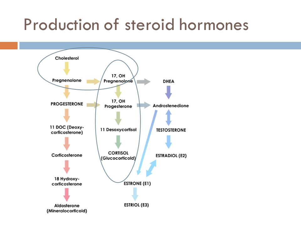 Production of steroid hormones