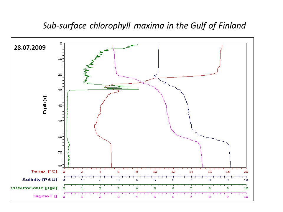 Sub-surface chlorophyll maxima in the Gulf of Finland