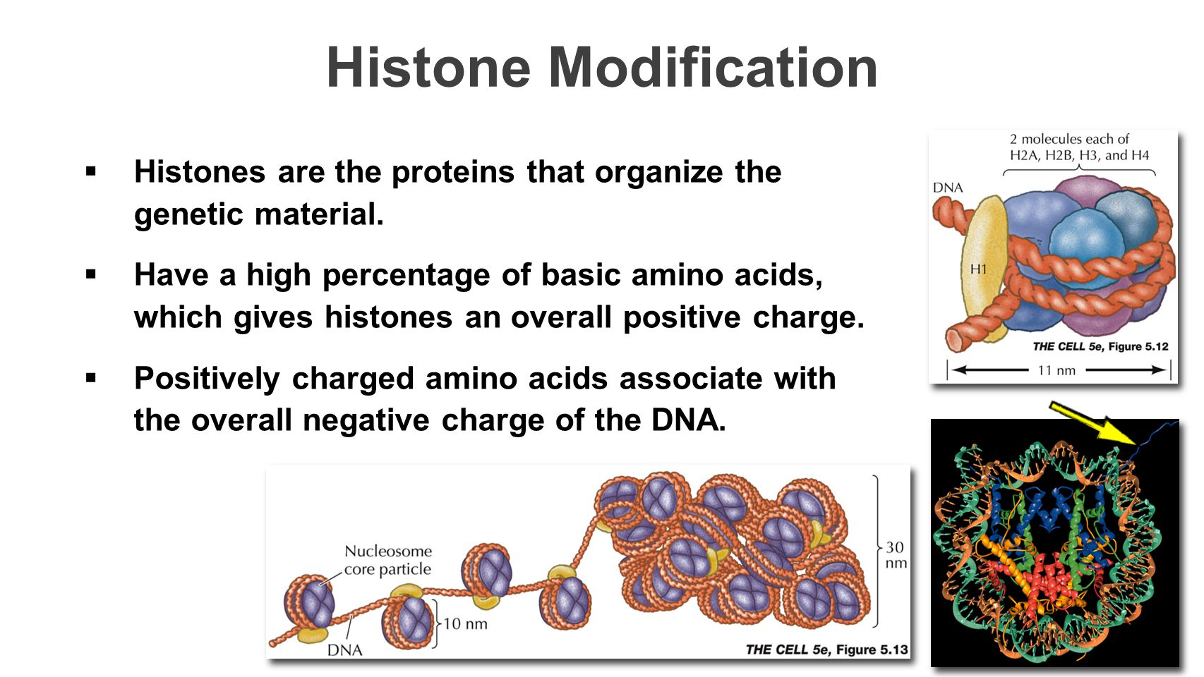 Histone Modification Histones are the proteins that organize the genetic material.