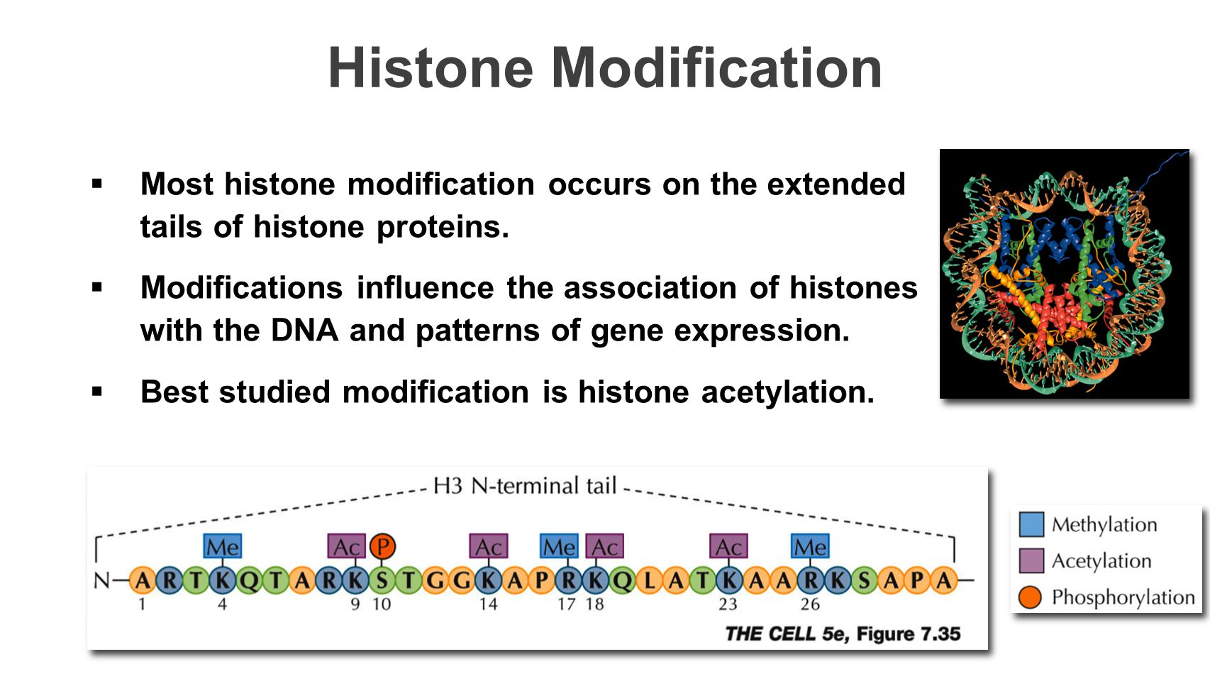 Histone Modification Most histone modification occurs on the extended tails of histone proteins.