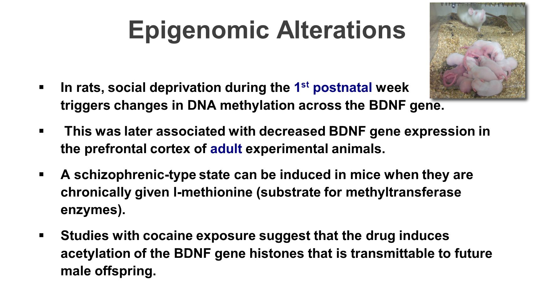 Epigenomic Alterations
