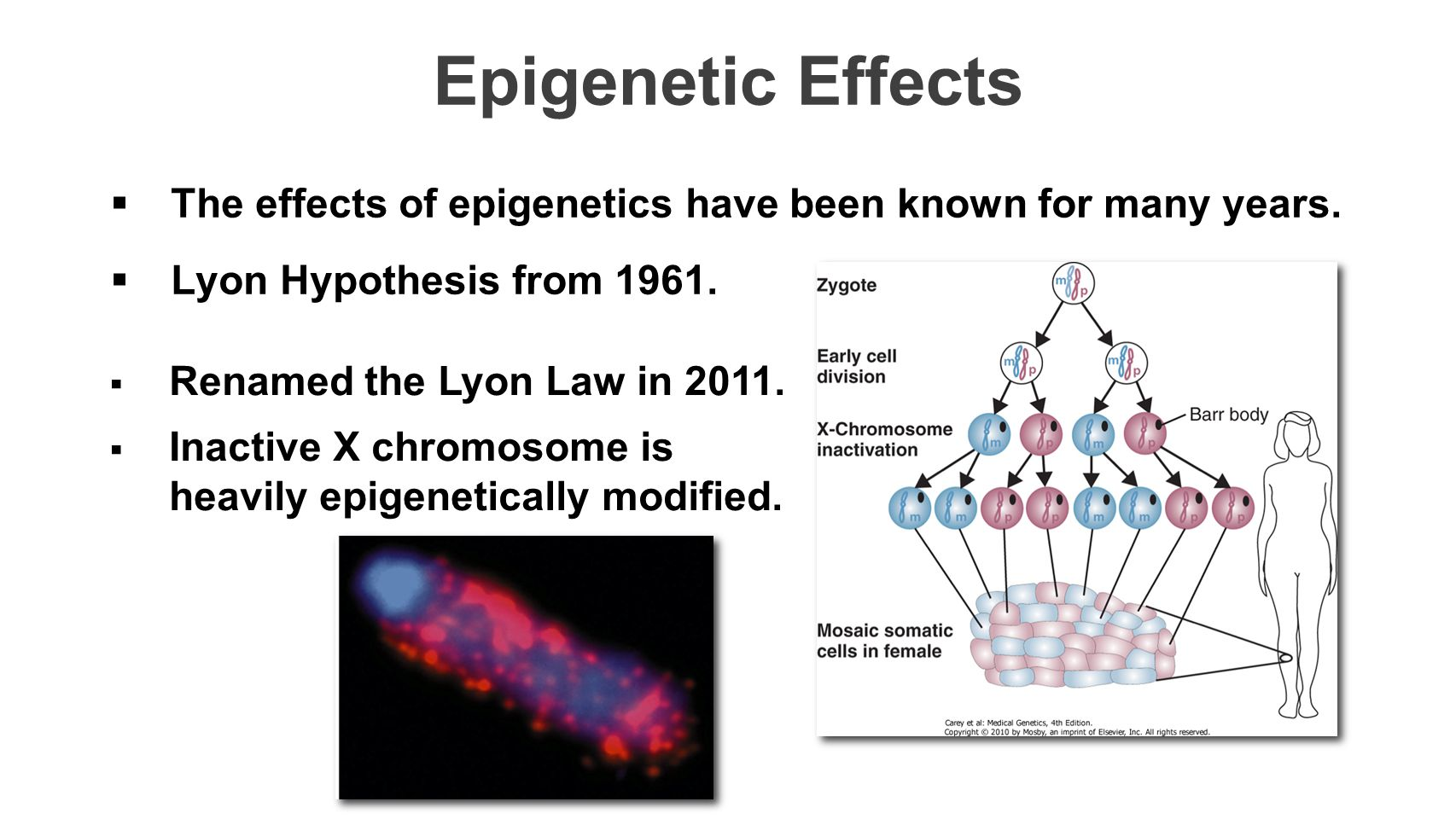 Epigenetic Effects The effects of epigenetics have been known for many years. Lyon Hypothesis from 1961.