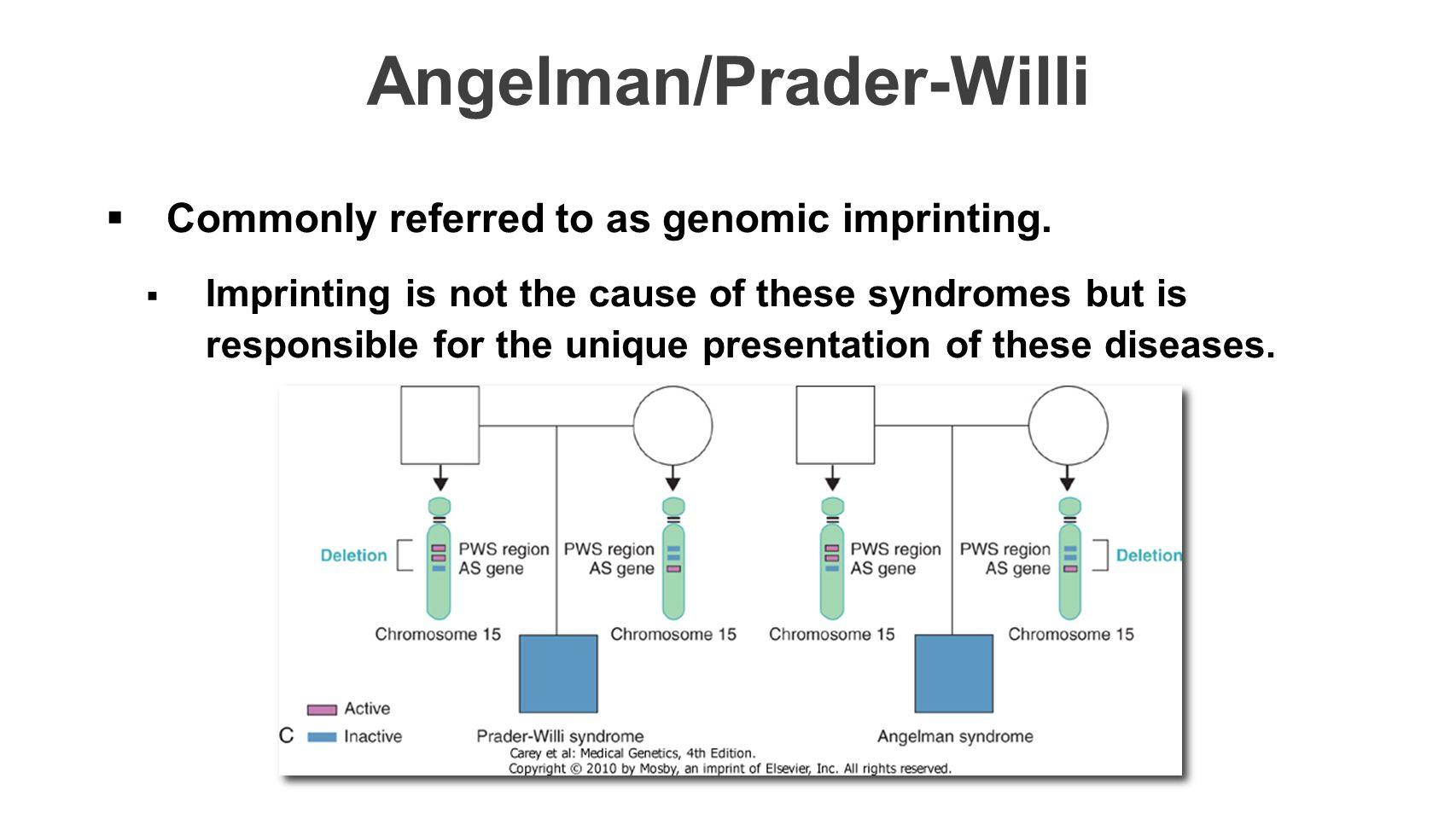 Angelman/Prader-Willi