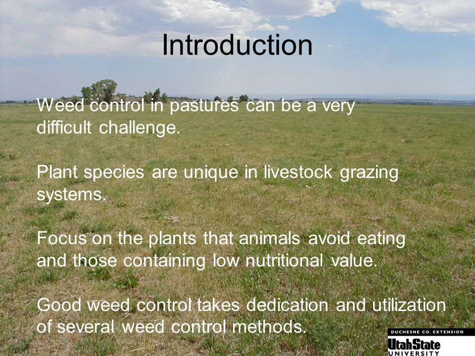 Introduction Weed control in pastures can be a very