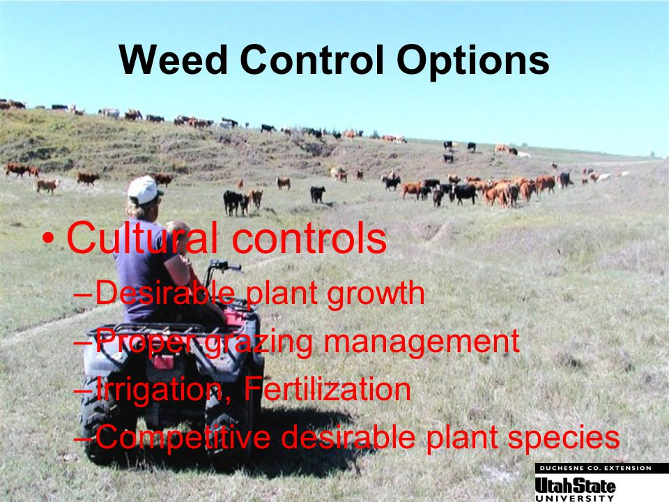 Cultural controls Weed Control Options Desirable plant growth