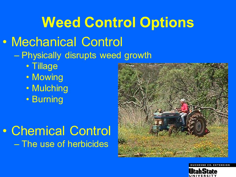 Weed Control Options Mechanical Control Chemical Control