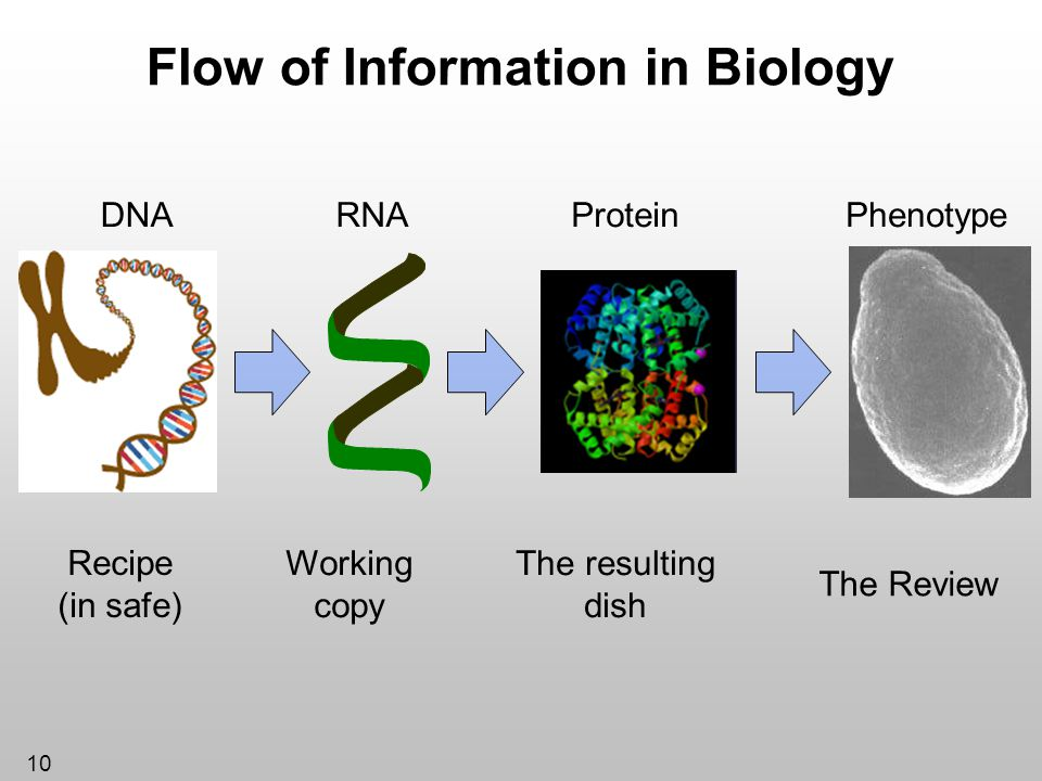 Flow of Information in Biology