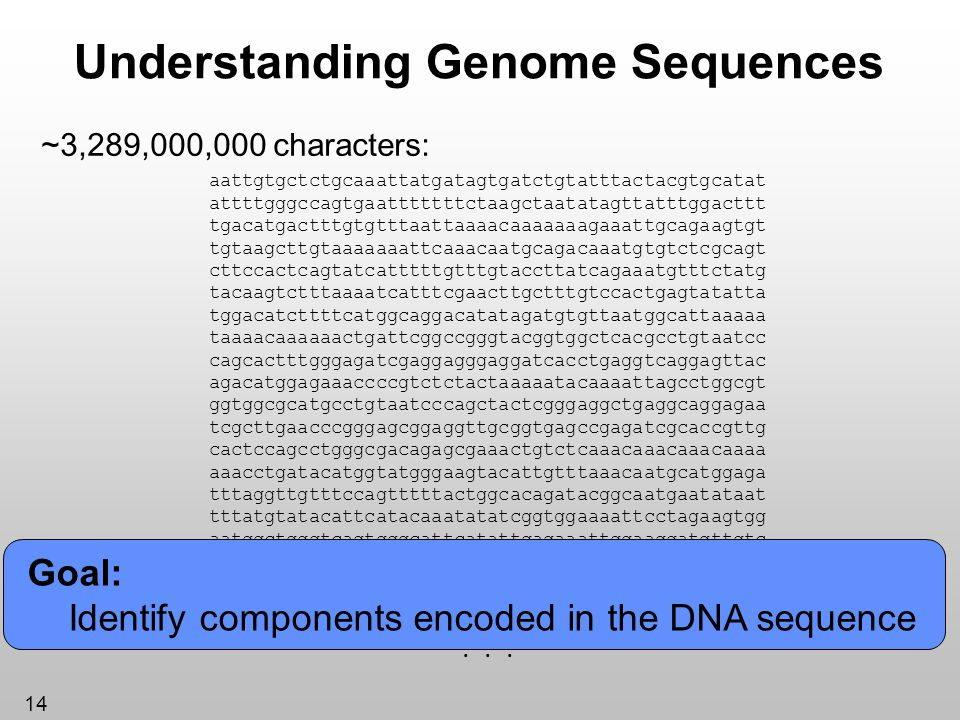 Understanding Genome Sequences