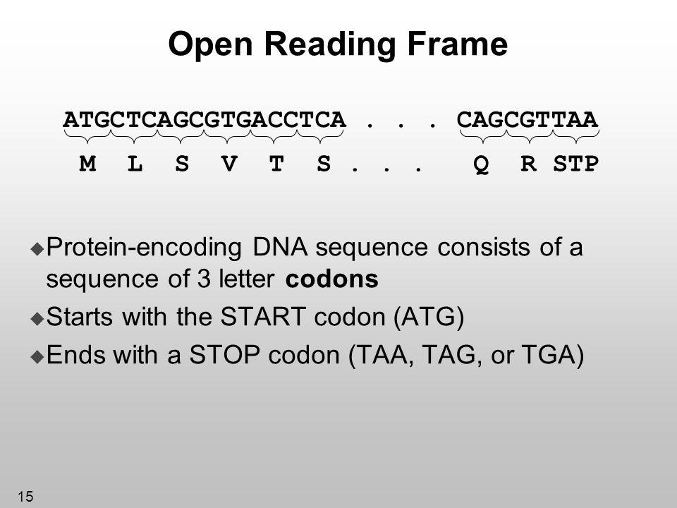 Open Reading Frame ATGCTCAGCGTGACCTCA . . . CAGCGTTAA