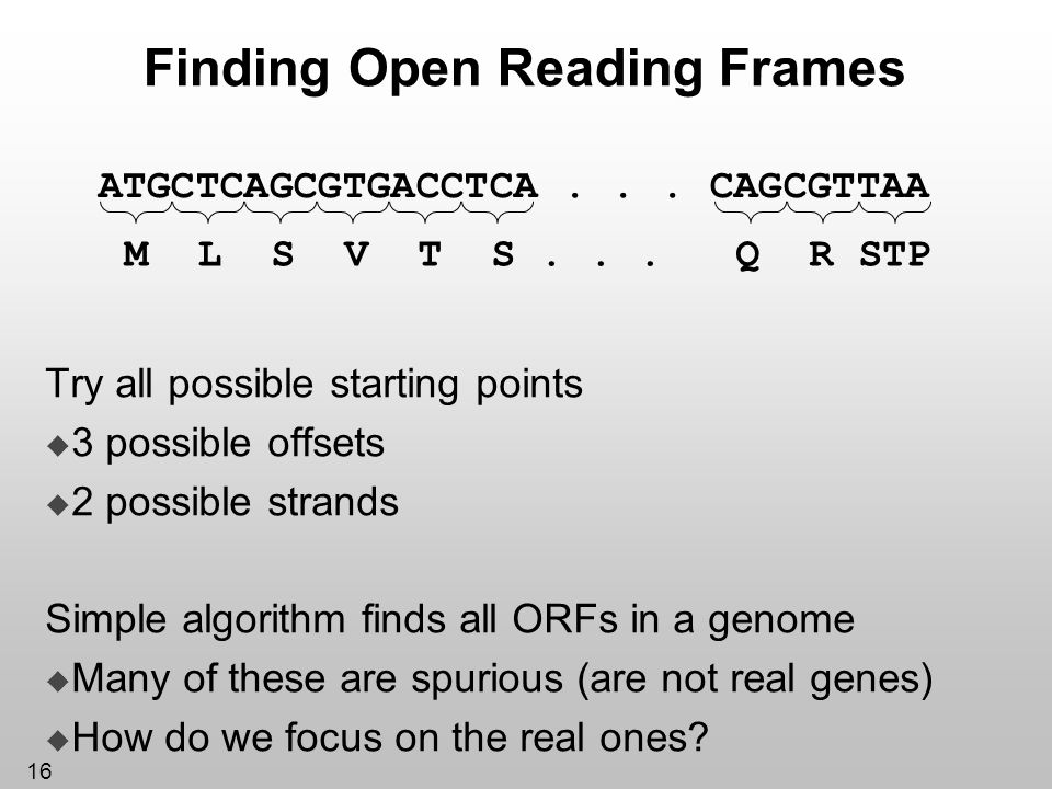 Finding Open Reading Frames