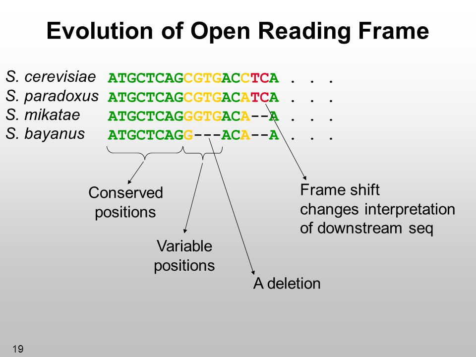 Evolution of Open Reading Frame