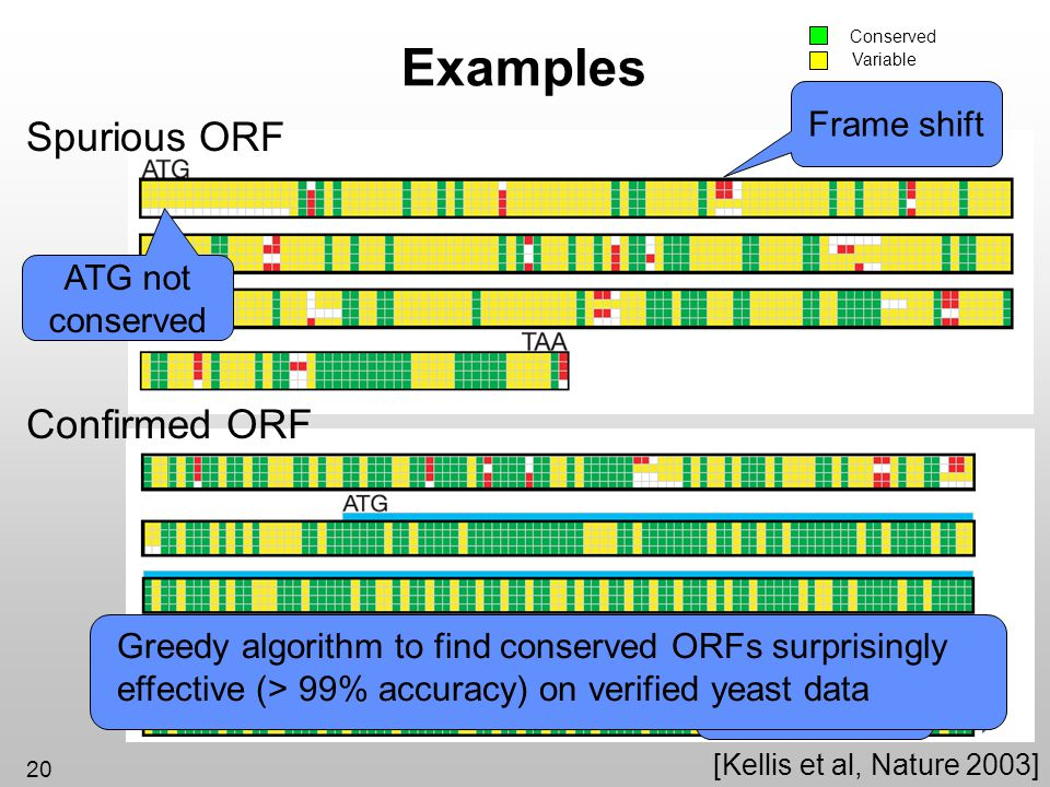 Examples Spurious ORF Confirmed ORF Frame shift ATG not conserved