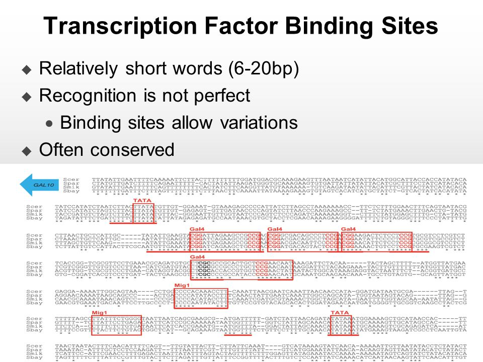 Transcription Factor Binding Sites