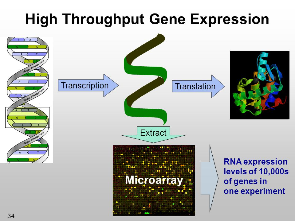 High Throughput Gene Expression