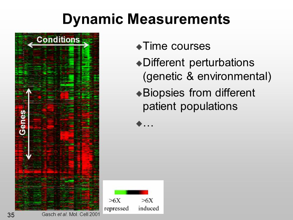 Dynamic Measurements Time courses