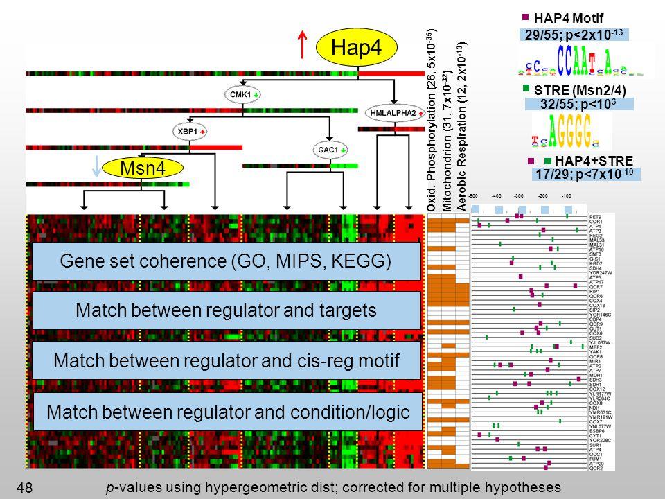 Hap4 Msn4 Gene set coherence (GO, MIPS, KEGG)
