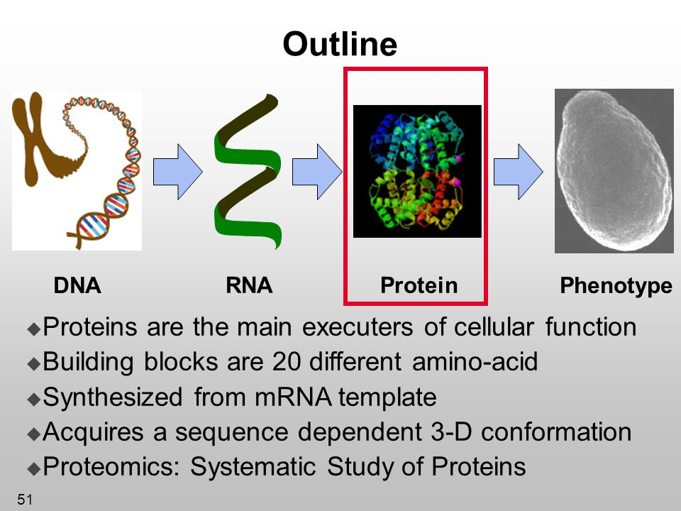 Outline Proteins are the main executers of cellular function
