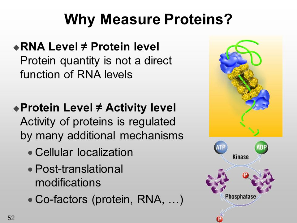 Why Measure Proteins RNA Level ≠ Protein level Protein quantity is not a direct function of RNA levels.