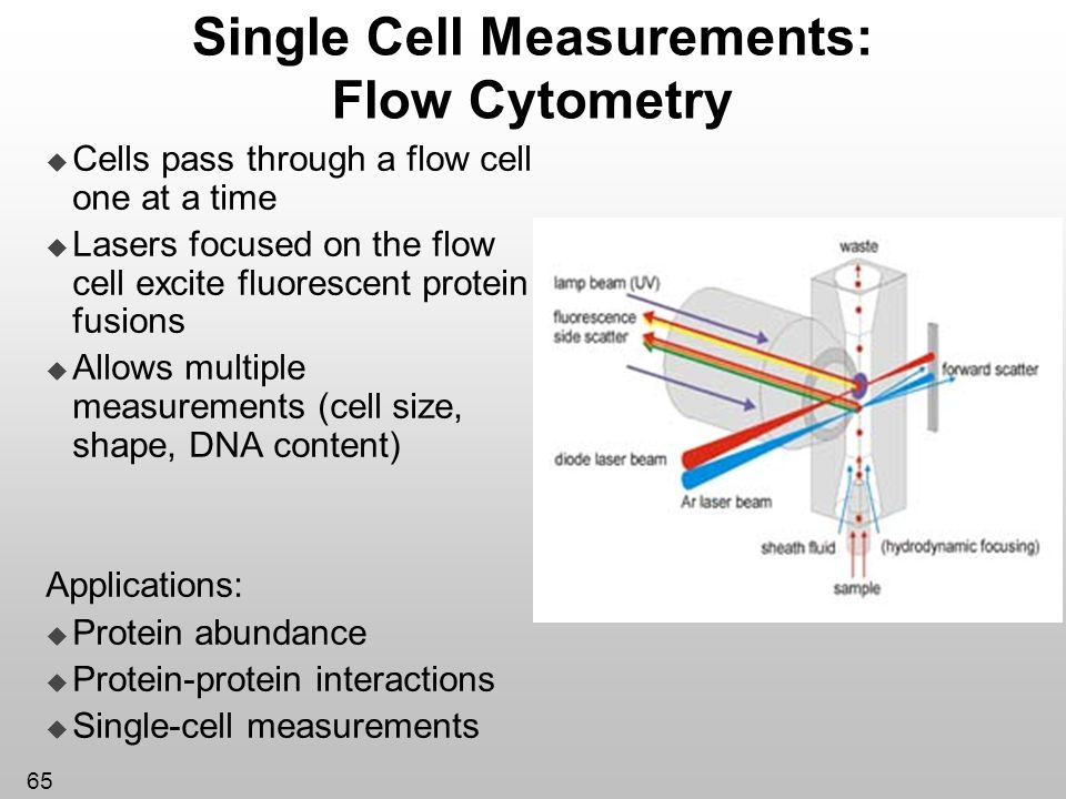 Single Cell Measurements: Flow Cytometry