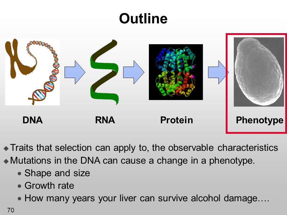 Outline Protein DNA RNA Phenotype