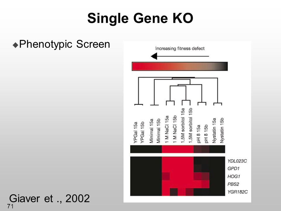Single Gene KO Phenotypic Screen Giaver et ., 2002