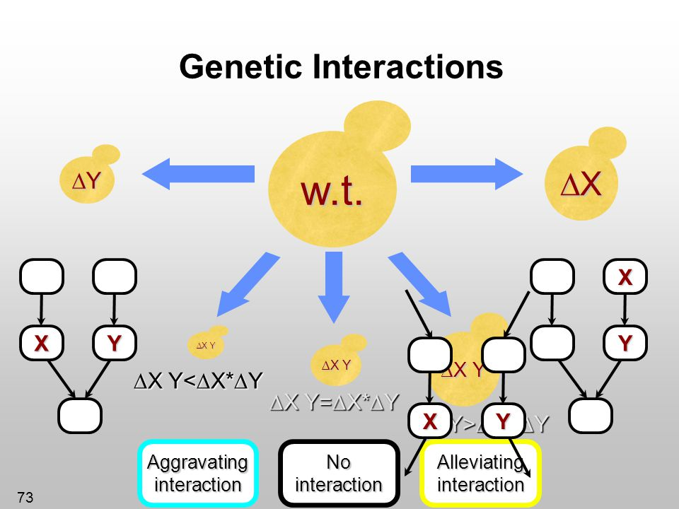 w.t. Genetic Interactions ∆X ∆Y ∆X Y<∆X*∆Y ∆X Y=∆X*∆Y