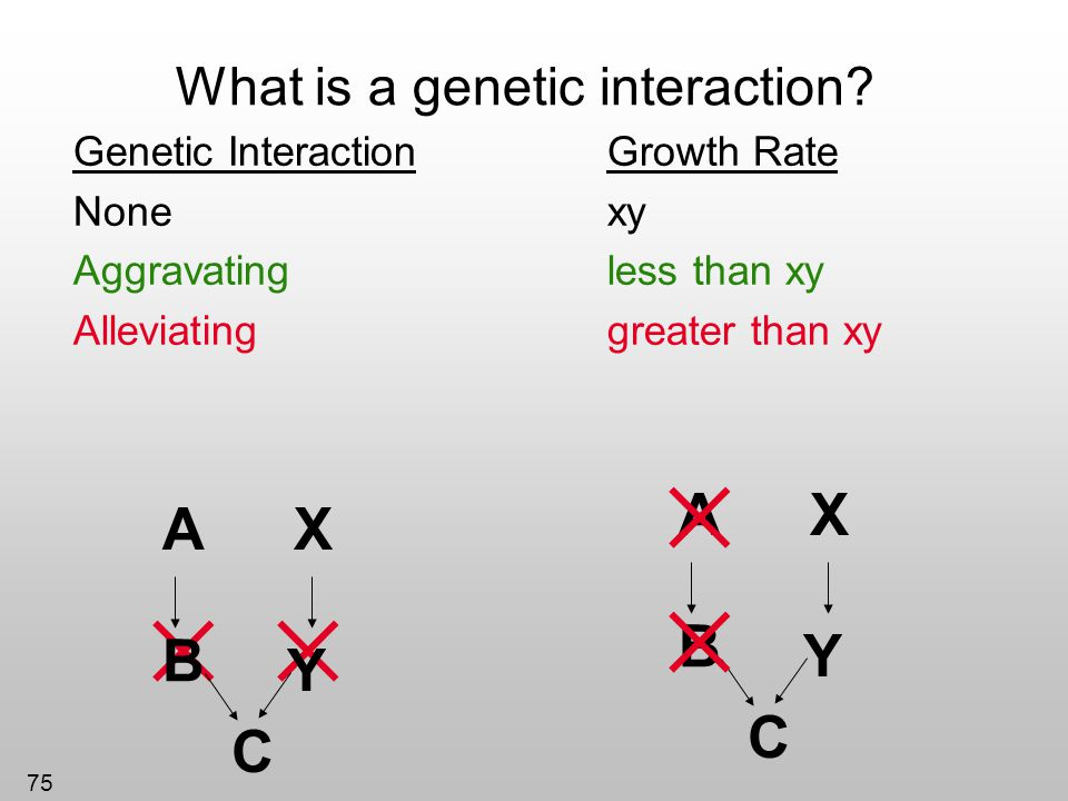 What is a genetic interaction