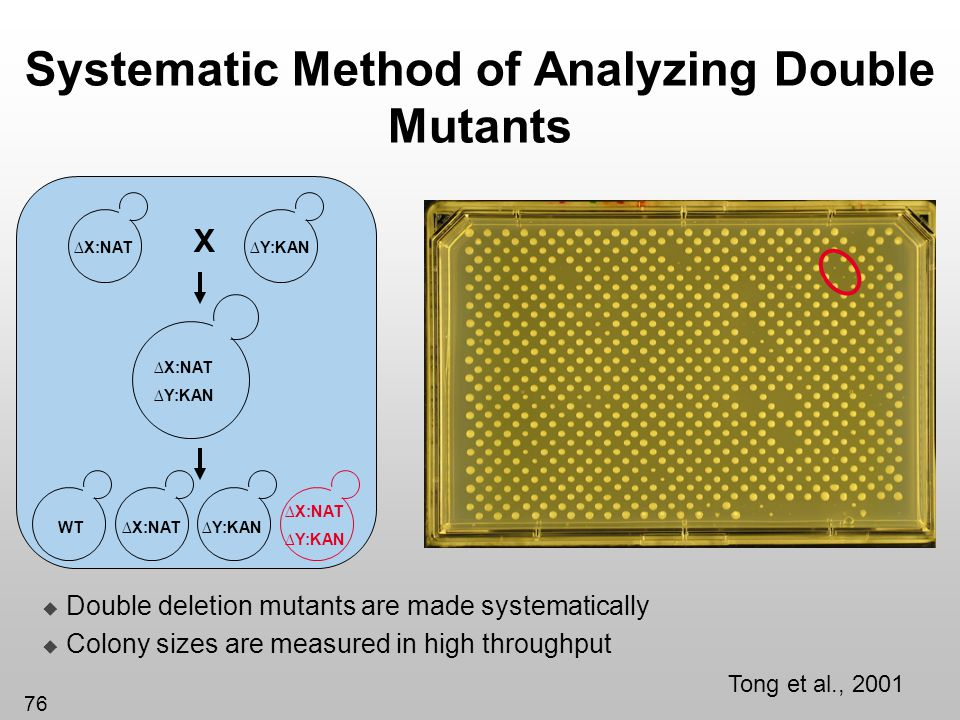 Systematic Method of Analyzing Double Mutants