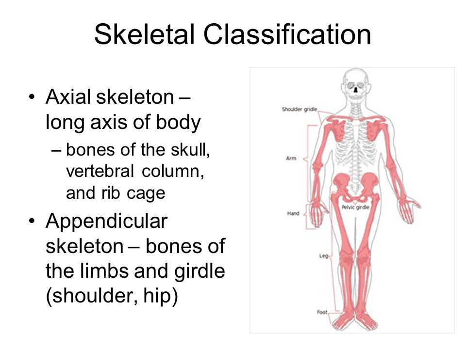 Skeletal Classification