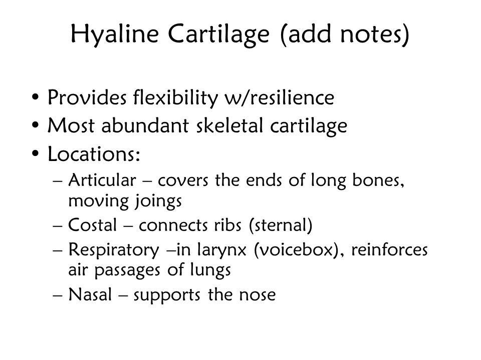 Hyaline Cartilage (add notes)