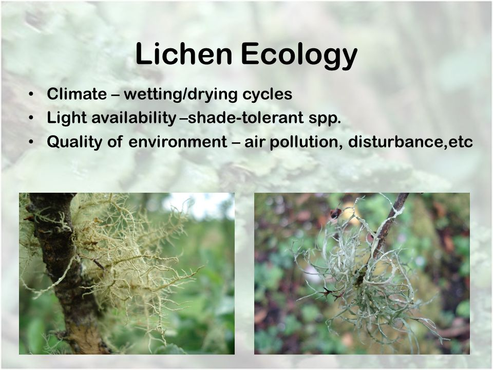Lichen Ecology Climate – wetting/drying cycles