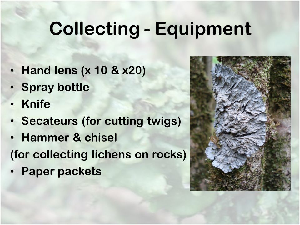 Collecting - Equipment