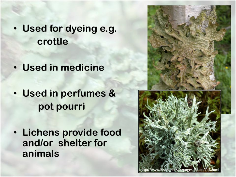 Lichens provide food and/or shelter for animals