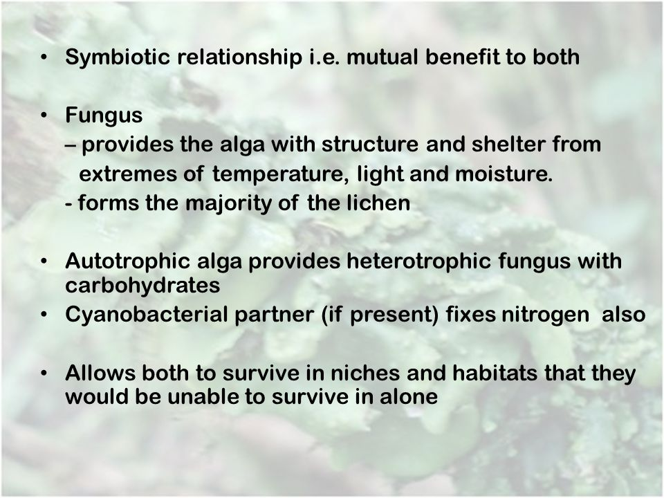 Symbiotic relationship i.e. mutual benefit to both Fungus
