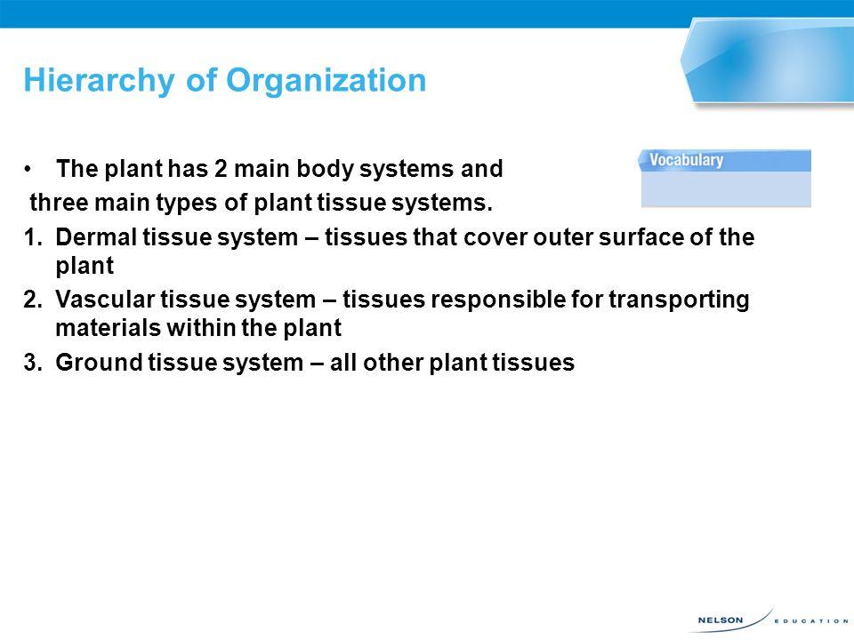 Hierarchy of Organization