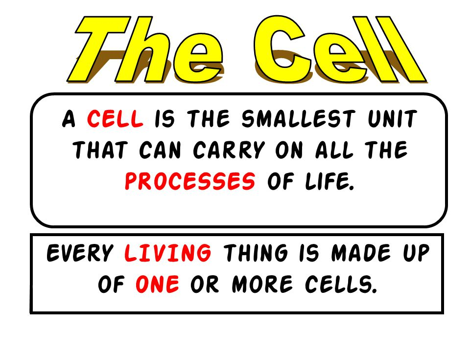 Every LIVING thing is made up of ONE or more cells.
