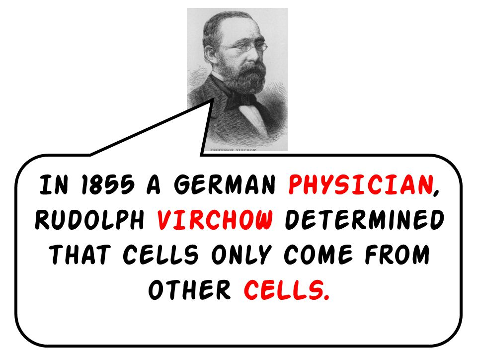 In 1855 a German PHYSICIAN, Rudolph VIRCHOW determined that cells only come from other CELLS.