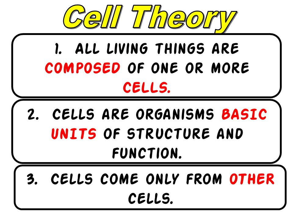 1. All living things are COMPOSED of one or more CELLS.