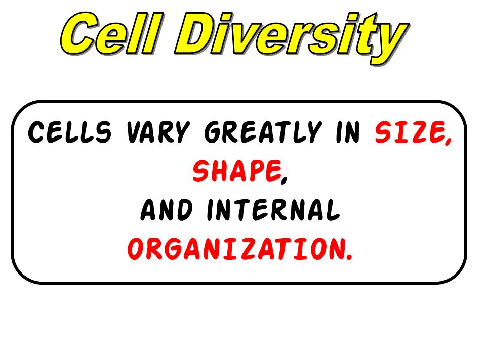 Cells vary greatly in SIZE, SHAPE, and internal ORGANIZATION.