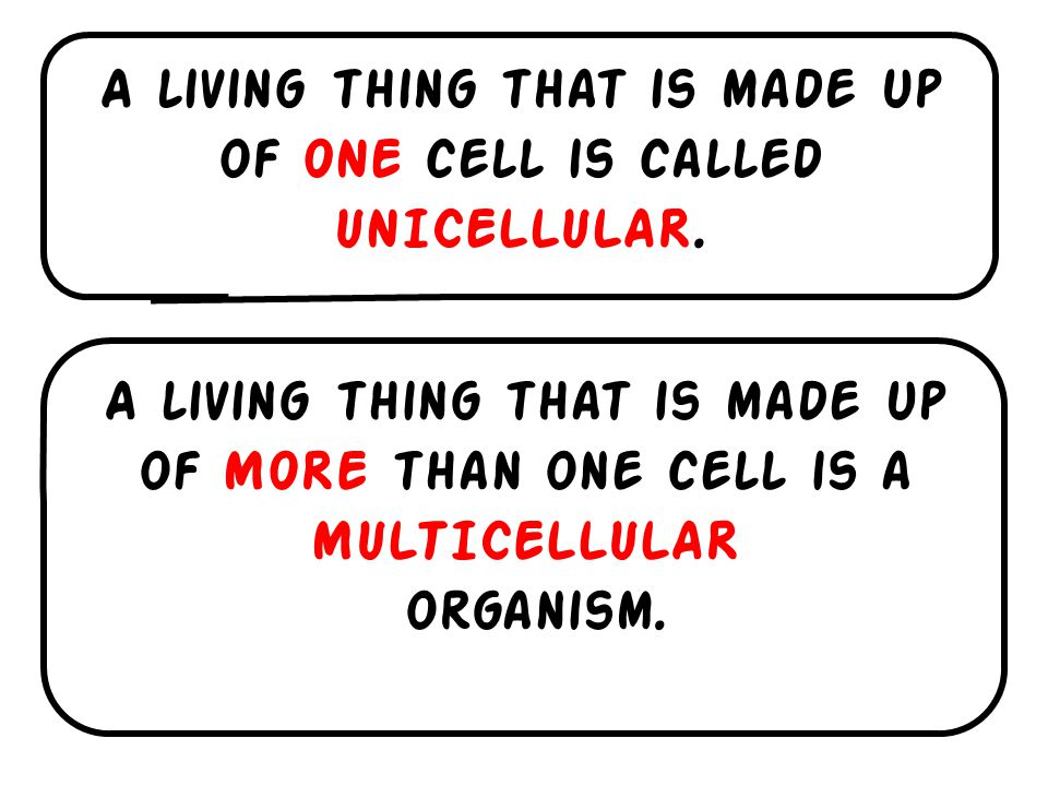 A living thing that is made up of ONE cell is called UNICELLULAR.