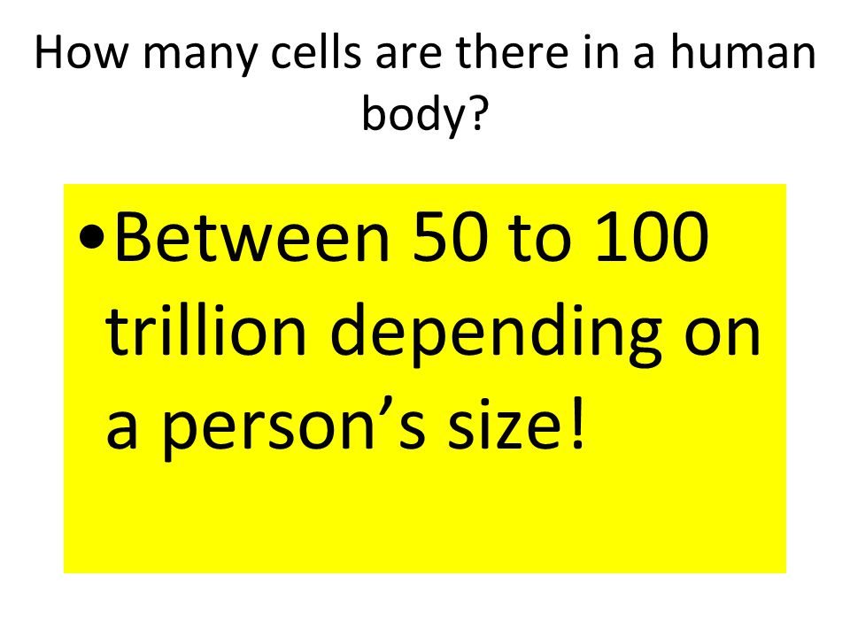 How many cells are there in a human body